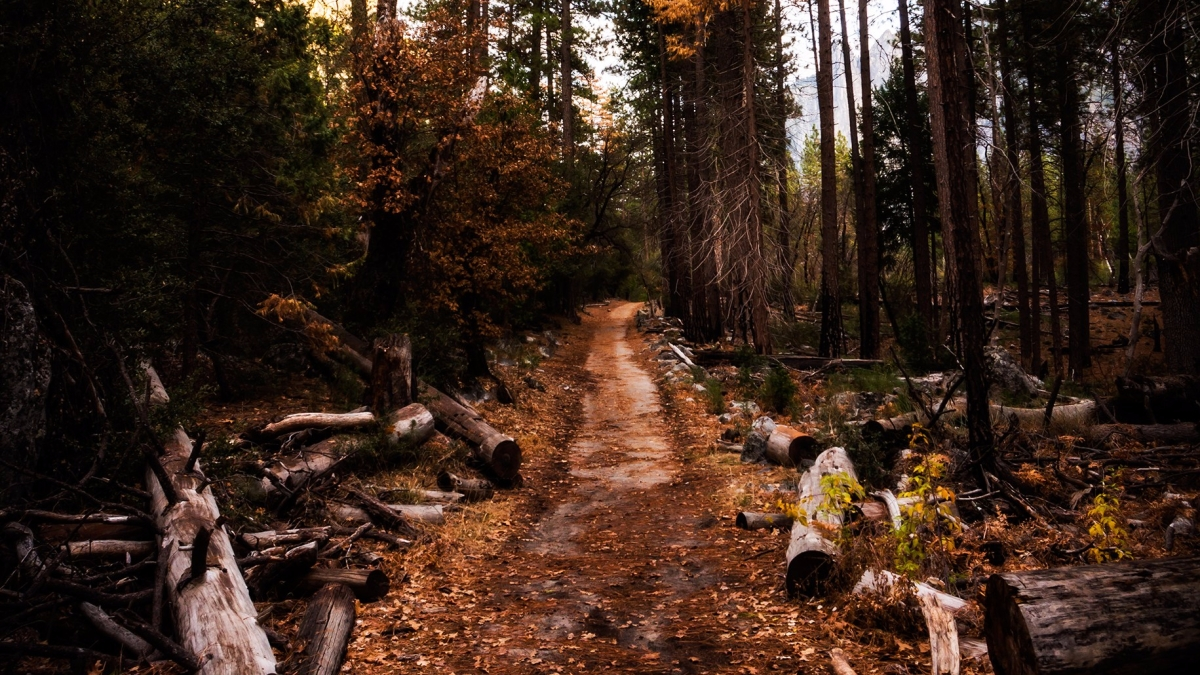an uncharted forest path